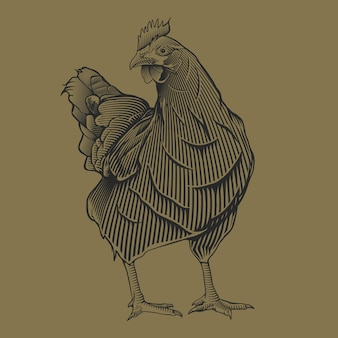 Main, dessin vintage illustration de chiken