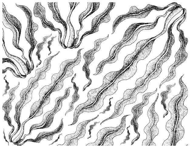 Main dessinée d'algues kombu sur fond blanc