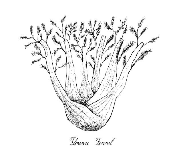 Main dessinée de bulbe de fenouil sur fond blanc