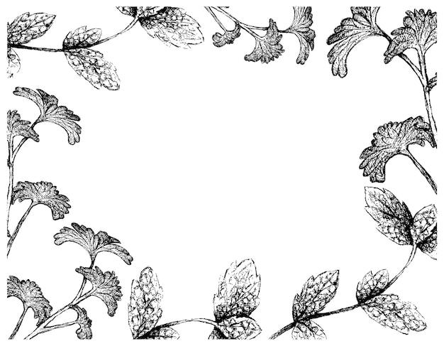 Main dessinée de cadre de feuilles de menthe poivrée et de persil