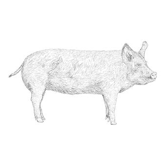 Main dessinée conception d'illustration de cochon
