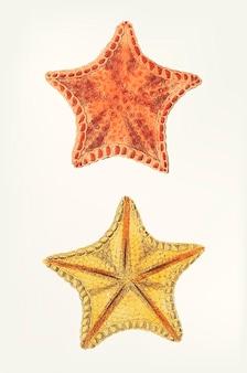 Main dessinée d'étoiles de mer