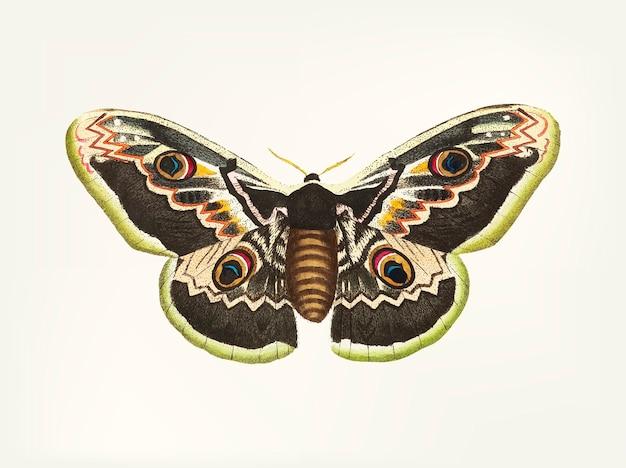 Main dessinée grand papillon de paon