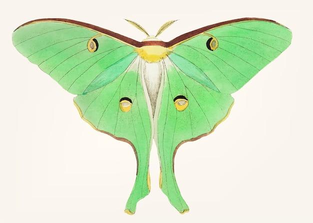 Main dessinée de gros phalaena vert pois