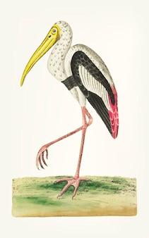 Main dessinée d'ibis blanc