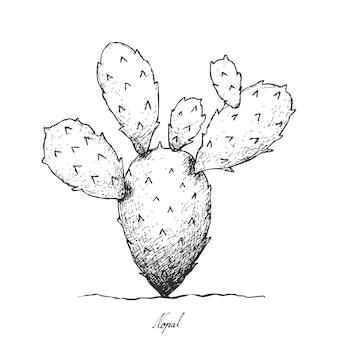 Main dessinée de nopal cactus sur fond blanc