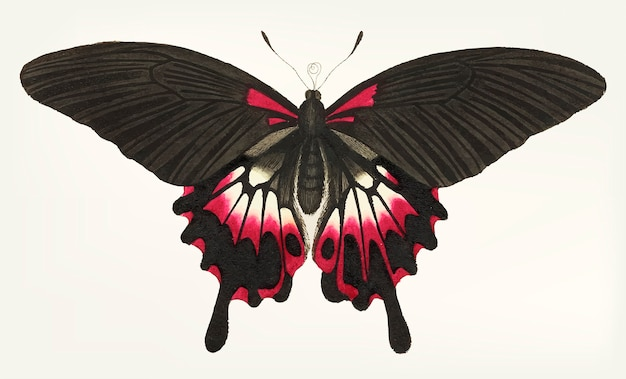 Main dessinée de papillon brun caudé