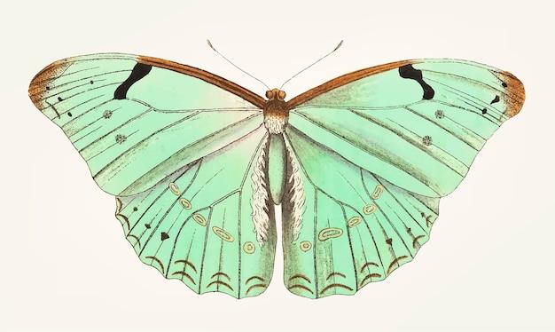 Main dessinée de papillon laertes