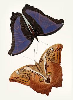 Main dessinée de papillons de hibou géant automedon