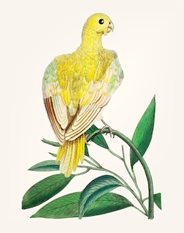 Main dessinée de perruche jaune
