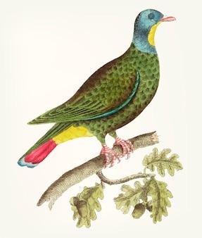 Main dessinée de pigeon à tête noire