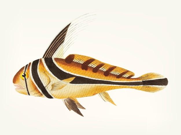 Main dessinée de poisson chevalier