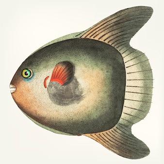 Main dessinée de poisson soleil court