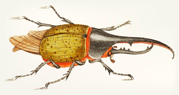 Main dessinée de scarabée hercule