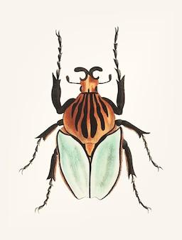 Main dessinée de scarabée