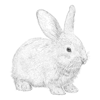 Main dessinée vecteur de lapin illustration