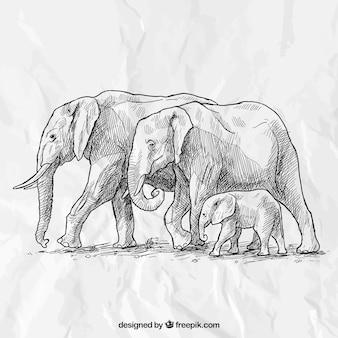 Main famille d'éléphants dessinée