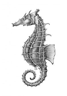 Main d'hippocampe dessin illustration de gravure vintage isoler sur fond blanc