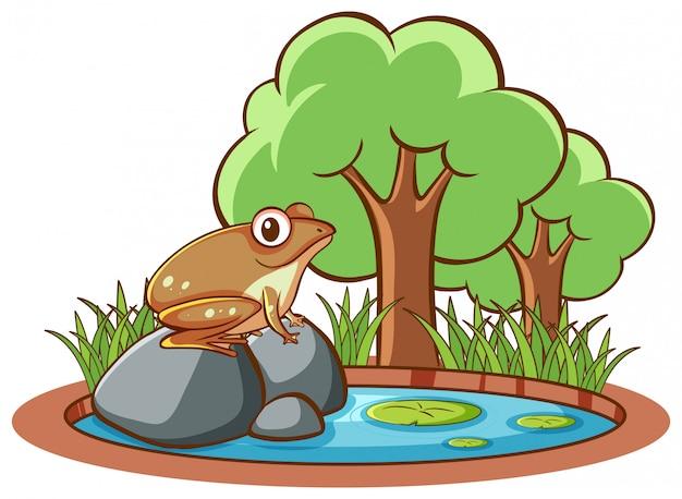 Main isolée de grenouille dans le jardin