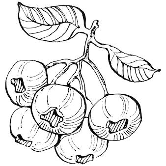 Main de myrtille dessin clipart vintage. logo de baies ou tatouage très détaillé dans le concept de style art en ligne. noir et blanc isolé. illustration de gravure vintage antique pour emblème