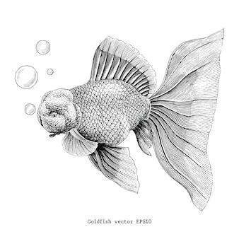 Main de poisson rouge dessin illustration de gravure vintage