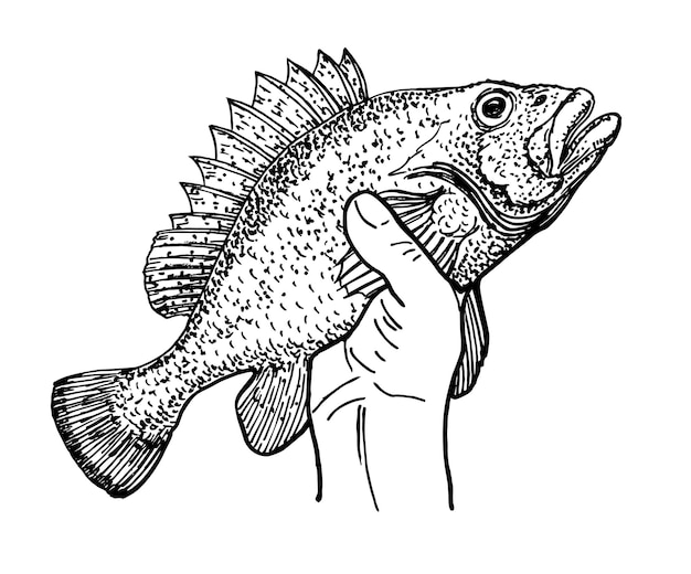 Main tenant un poisson dans la main du pêcheur logo de pêche gravure vintage dessin stylisé
