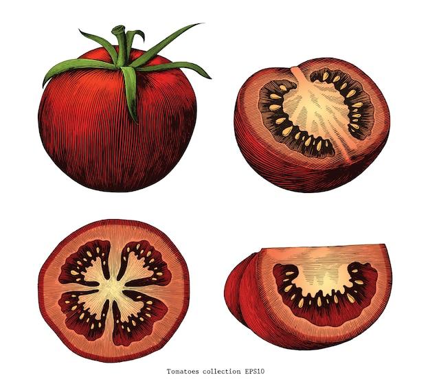Main de tomates dessiner vintage isolé sur fond blanc