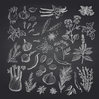 Main de vecteur dessiné des herbes et des épices sur l'ensemble de tableau noir