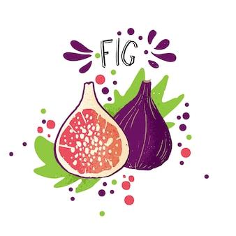 Main de vecteur dessiner illustration de figue colorée avec une tranche de figue et de feuilles vertes.