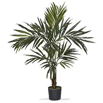 Main vecteur tracé palmier