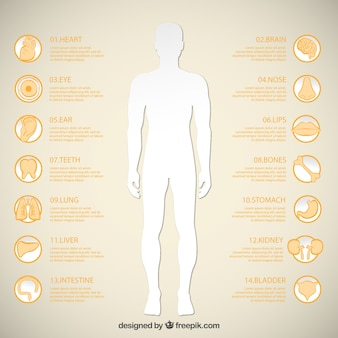 Man silhouette et icônes d'organes humains
