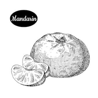 Mandarin dessiné à la main.
