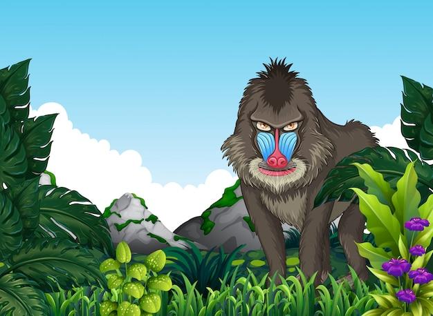 Mandrill babouin dans la forêt