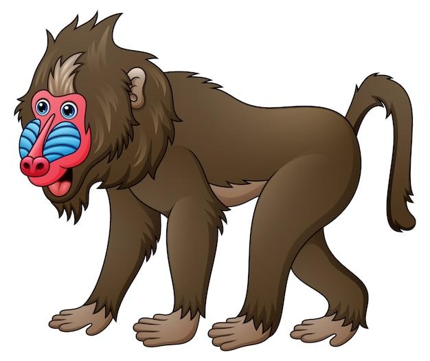 Mandrill babouin de dessin animé