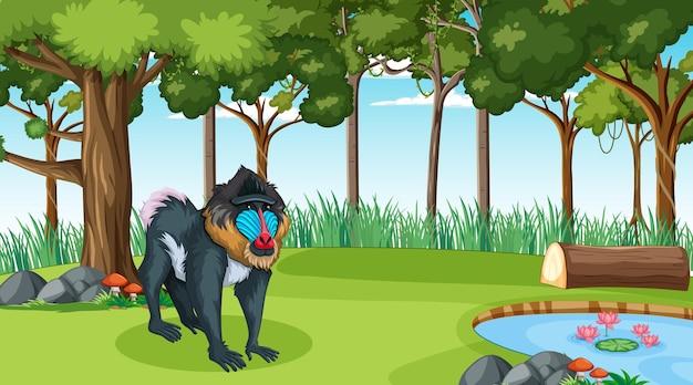 Un mandrill en forêt à scène de jour avec de nombreux arbres
