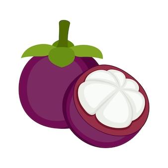 Mangoustan, fruits entiers et coupés, sur fond blanc, illustration vectorielle