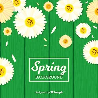 Marguerites plates printemps fond