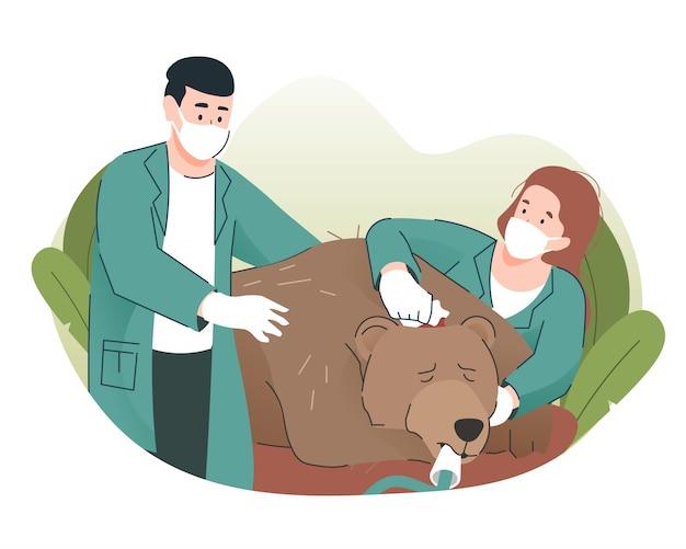 Médecin Vétérinaire Examinant Une Blessure à L'ours Vecteur Premium