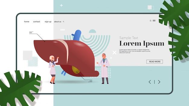 Médecins couple examinant le foie consultation médicale inspection d'organe interne humain examen concept de traitement espace copie horizontale pleine longueur