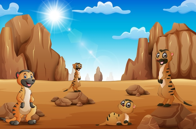 Meerkats de dessin animé debout dans le désert