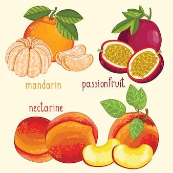 Mélange de fruits frais isolé, illustration vectorielle
