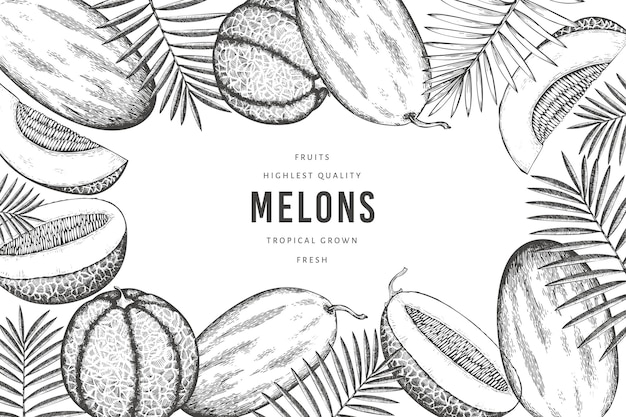 Melons avec modèle de feuilles tropicales. illustration de fruits exotiques dessinés à la main. bannière de fruits de style rétro.