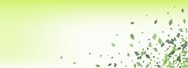 Menthe verdure vent panoramique fond vert plante