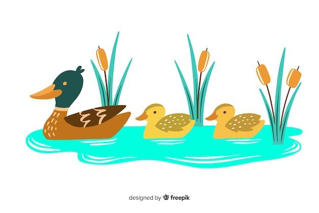 Mère canard et canetons en flaque