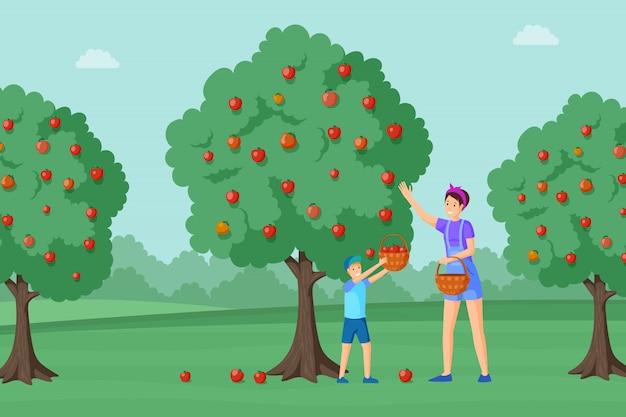 Mère, fils, récolte, pommes, illustration