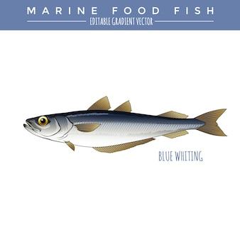Merlan bleu. poissons marins