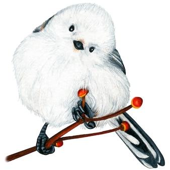Mésange à longue queue oiseau dessiné à la main crayons de couleur aquarelle