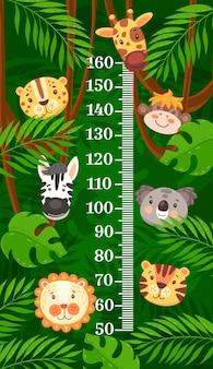 Mesure de la croissance des animaux de dessin animé africains et tropicaux du tableau de la hauteur des enfants. mètre d'autocollant mural vectoriel pour la mesure de la hauteur des enfants, zèbre mignon, girafe, lion et léopard avec des personnages de singe et de tigre