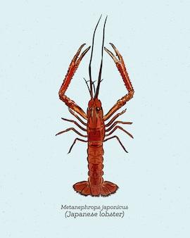 Metanephrops japonicus est une espèce de homard que l'on trouve dans les eaux japonaises.