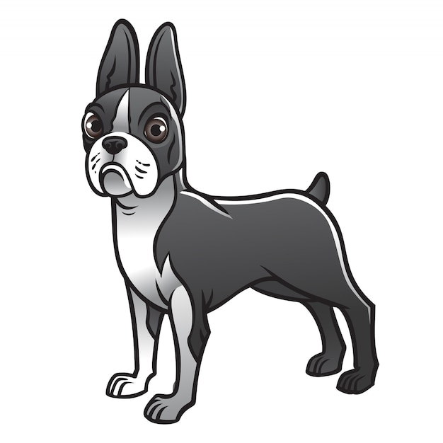 Mignon chien boston terrier